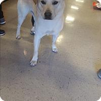Adopt A Pet :: A - ARCHIE - Ann Arbor, MI