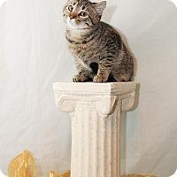 Adopt A Pet :: Apollo - Scarborough, ME