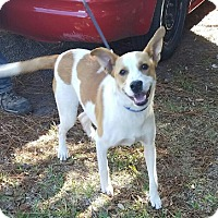 Adopt A Pet :: Minnie - Chiefland, FL