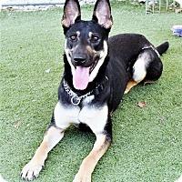 Adopt A Pet :: Roxy - San Jacinto, CA