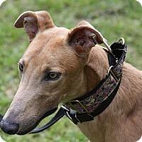 Adopt A Pet :: Alan - West Palm Beach, FL