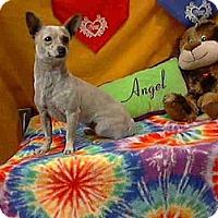 Adopt A Pet :: Alba URGENT - San Diego, CA