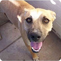 Adopt A Pet :: Honey - Scottsdale, AZ