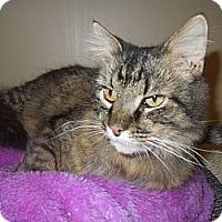Adopt A Pet :: Archie - Medina, OH