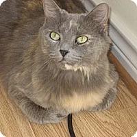 Adopt A Pet :: Sophie - Huffman, TX