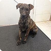 Adopt A Pet :: Millie - Lancaster, VA