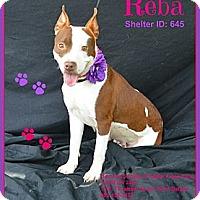 Adopt A Pet :: Reba - Plano, TX