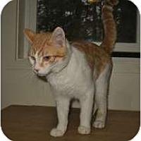 Adopt A Pet :: Truman - Shelton, WA