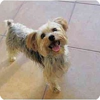 Adopt A Pet :: Andy - West Palm Beach, FL