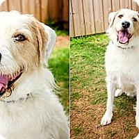 Adopt A Pet :: Phinn - Gadsden, AL
