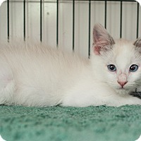 Adopt A Pet :: Fiery - Shelton, WA