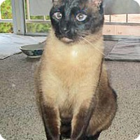 Adopt A Pet :: BeeBee - Laguna Woods, CA