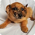 Adopt A Pet :: Eve
