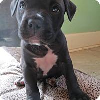 Adopt A Pet :: Vance - Gainesville, FL