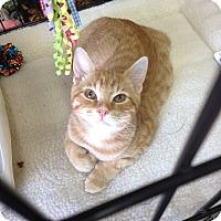 Adopt A Pet :: Jaspurr - Horsham, PA