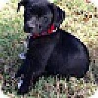 Adopt A Pet :: KATE - EDEN PRAIRIE, MN
