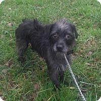 Adopt A Pet :: Annie - Waldorf, MD