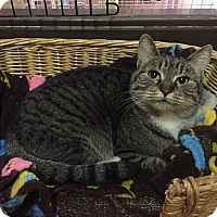 Adopt A Pet :: Jewels - Blasdell, NY
