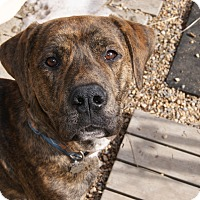 Adopt A Pet :: Benson - New Freedom, PA