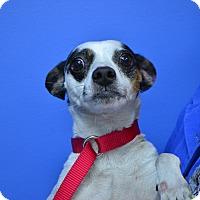 Adopt A Pet :: Speckel - Miami, FL