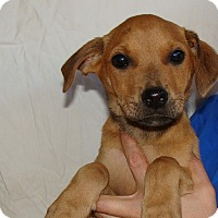 Adopt A Pet :: Cinder - Oviedo, FL