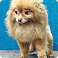 Adopt A Pet :: Tucson - Waldorf, MD