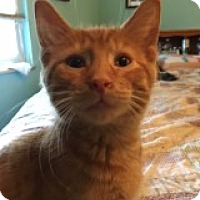 Adopt A Pet :: Scotty - Delmont, PA