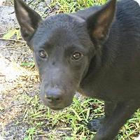 Adopt A Pet :: Barbara/Babs! - St Petersburg, FL