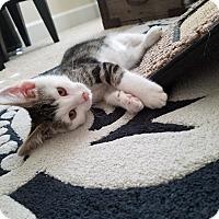 Adopt A Pet :: Shakespeare - Boise, ID