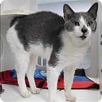 Adopt A Pet :: Ping - Topeka, KS