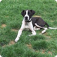 Adopt A Pet :: Wasabi-Adopted! - Detroit, MI