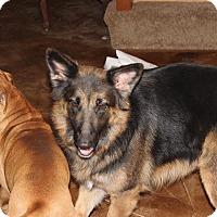 Adopt A Pet :: Millie - Portland, ME