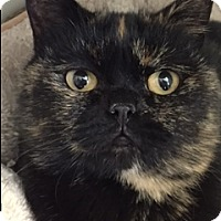 Adopt A Pet :: Honey Mae - Divide, CO