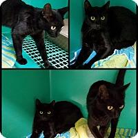Adopt A Pet :: Pumpkin & Boo - California City, CA