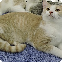 Adopt A Pet :: Dandelion - MARENGO, IL