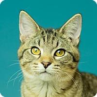 Adopt A Pet :: Adam - Columbia, IL