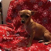 Adopt A Pet :: Maggie - Mesa, AZ