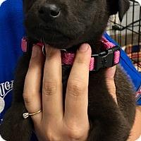 Adopt A Pet :: Delilah - Cumming, GA