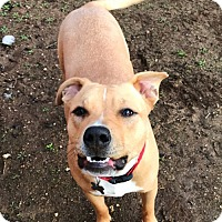Adopt A Pet :: BUSTER - Valley Village, CA