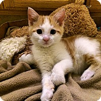 Adopt A Pet :: Kitty - Yuba City, CA