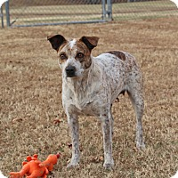 Adopt A Pet :: Kami - Savannah, TN