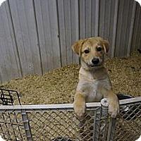 Adopt A Pet :: Dani - Conway, AR