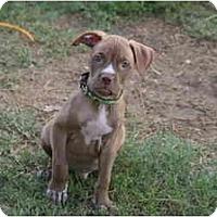 Adopt A Pet :: Briggs - DFW, TX