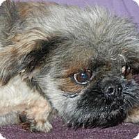 Adopt A Pet :: Gizmo - Antioch, IL