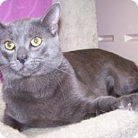 Adopt A Pet :: Lennon - Colorado Springs, CO