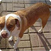 Adopt A Pet :: Trixie - Fowler, CA