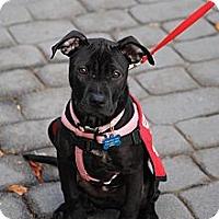 Adopt A Pet :: Tabatha - Shrewsbury, NJ