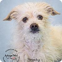 Adopt A Pet :: Timothy - Phoenix, AZ