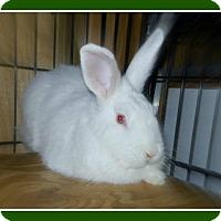 Adopt A Pet :: Dakota - Williston, FL
