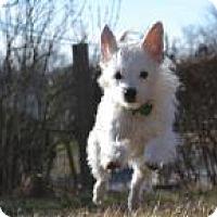 Adopt A Pet :: Pamela Danderson - South Amboy, NJ